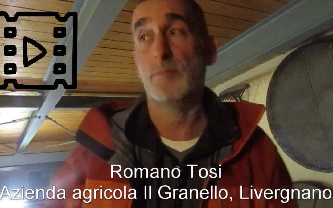 Romano Tosi, Il granello, Livergnano